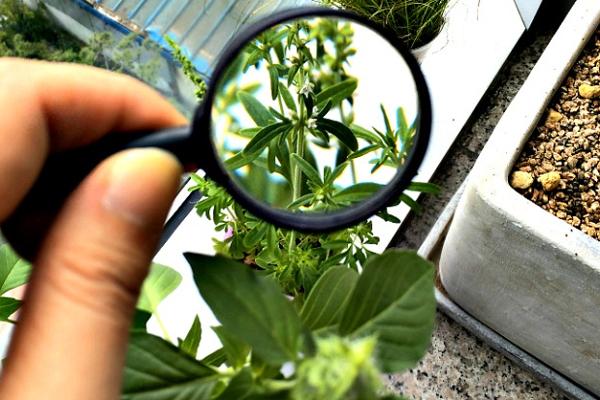 Botany Courses Details